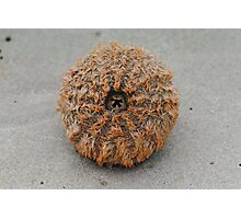 A lonely Sea Urchin, Washed up on a beach Photographic Print