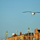 seagull at blackpool by petebreezy
