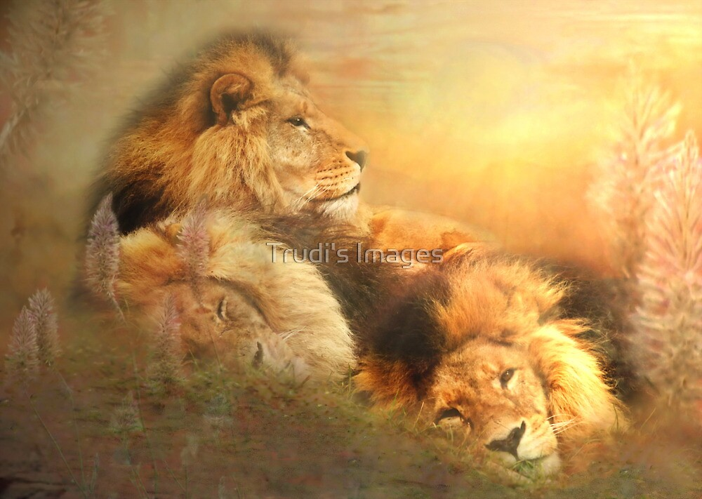 Serengeti Sons by Trudi's Images