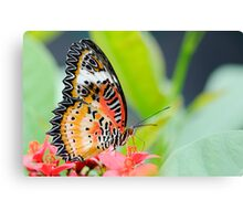 Maylay Lacewing Butterfly Canvas Print