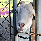 Does this fence make my head look fat? by PhotosByHealy