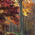 Beauty of Fall Trees by fionahoratio