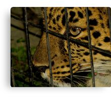 Captive Canvas Print