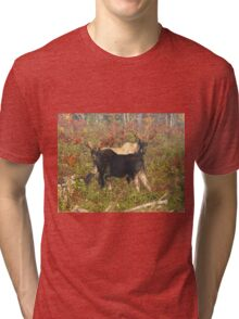 Maine Bull Moose Tri-blend T-Shirt