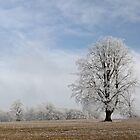 Landscape with frosty tree by photontrappist