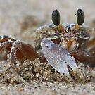 Chasing a crab in Ballitto by MarkySA
