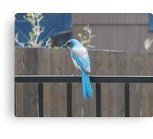 Blue Bird on Fence Canvas Print