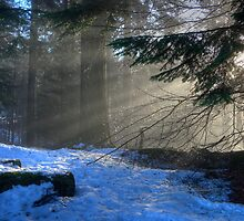 A Light Beyond These Woods... by GerryMac