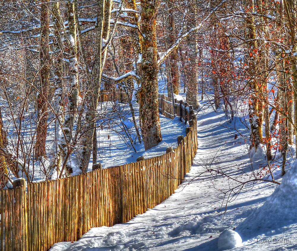 Winter Pickets by Luke Griffin