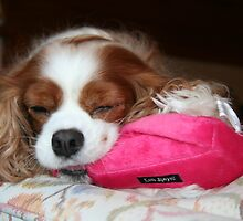 Peaceful Joy ~ Cavalier King Charles Spaniel by daphsam