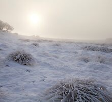 Frozen misty winter landscape, near Greenock, Scotland by PhotobyOve