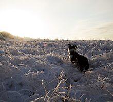 Frozen misty winter landscape, near Greenock, Scotland by PhotobyOve