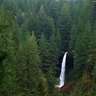 North Falls Peeks through the Trees, Silver Falls, Oregon by Dave Anderson