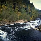 North Santiam River, Niagara, Oregon by Dave Anderson