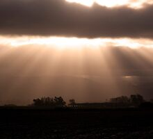 Rays of Light by Renee D. Miranda