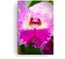 Bi-Color Cattleya Orchid Canvas Print