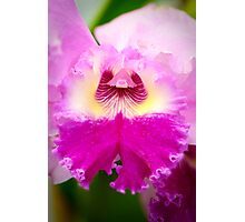 Bi-Color Cattleya Orchid Photographic Print