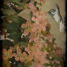 Hummingbird by MarieG
