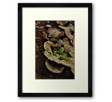 Fabulous Fungus Framed Print