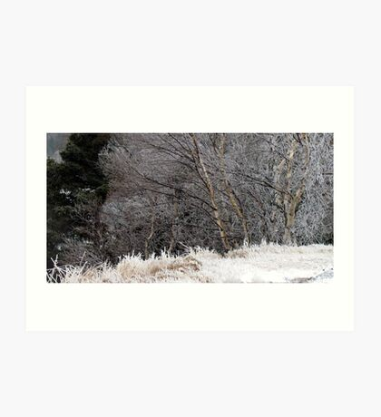 Iced Birches - Ice Storm 12.31.10 Art Print