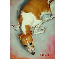 Chloe The Whippet Photographic Print