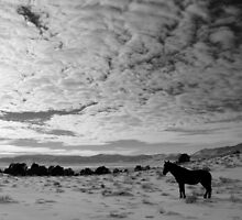 Lonesome Mustang Nevada Desert  by Jeanne  Nations