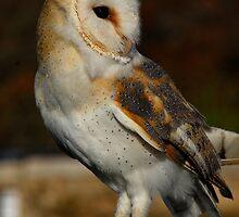 Barn owl by sandyprints