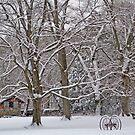 Winter in Ringwood by mikepaulhamus