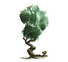 Little Tree 117 Photographic Print