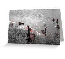 Black swans in black and white Greeting Card