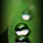 Little Gems by BobbiFox