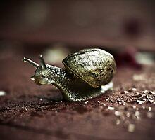 Take the slow road by fotozo