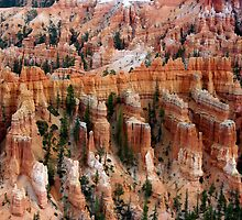 All in a Row ~ Bryce Canyon by Vicki Pelham