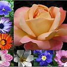 Spring and Summer Flowers Collage featuring Rose by Kathryn Jones