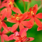 Lady Bug on Orange Orchid by Oscar Gutierrez