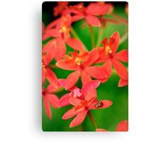 Lady Bug on Orange Orchid Canvas Print