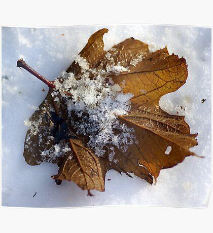 An overlap of Seasons Poster