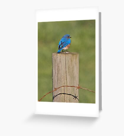 Bird and a wire Greeting Card