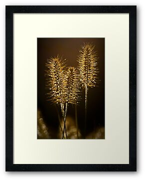 Ornamental Grass by onyonet photo studios