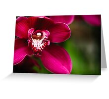 Red Cymbidium Orchid Greeting Card