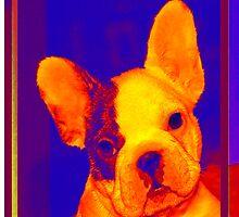 french bulldog by jashumbert