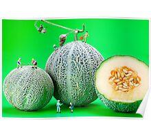 Planting Cantaloupe Melons miniature art Poster