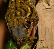 Reptiles & Amphibians of the World by naturalnomad