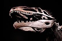 T-Rex by Christopher Herrfurth