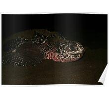 Leatherback Turtle Poster