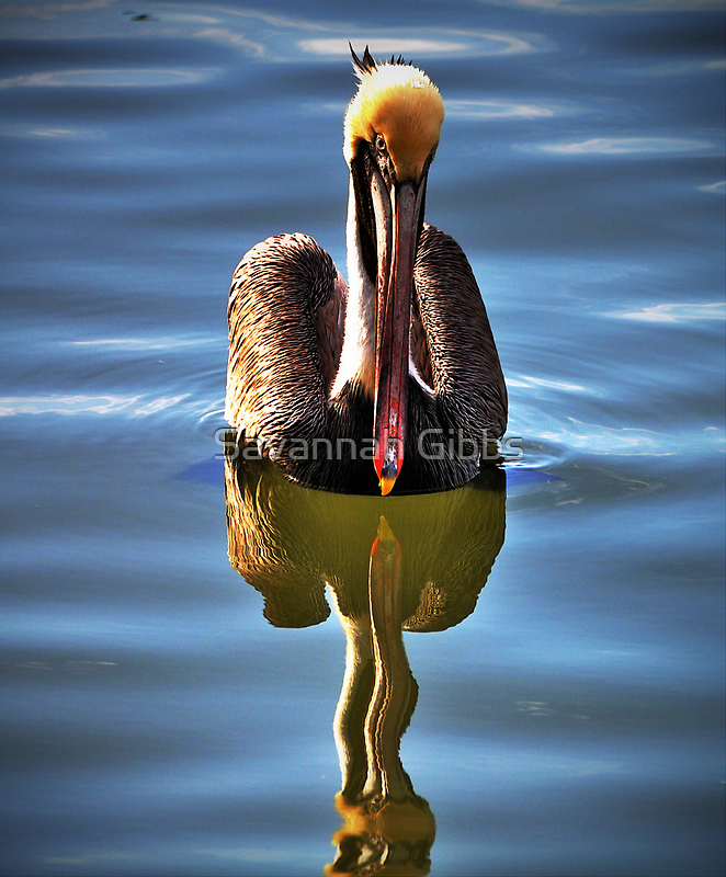 Pelican by Savannah Gibbs