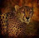 Cheetah by Sandy Keeton