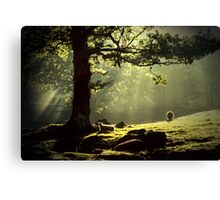 Early Morning Borrowdale In The English Lakedistrict Canvas Print
