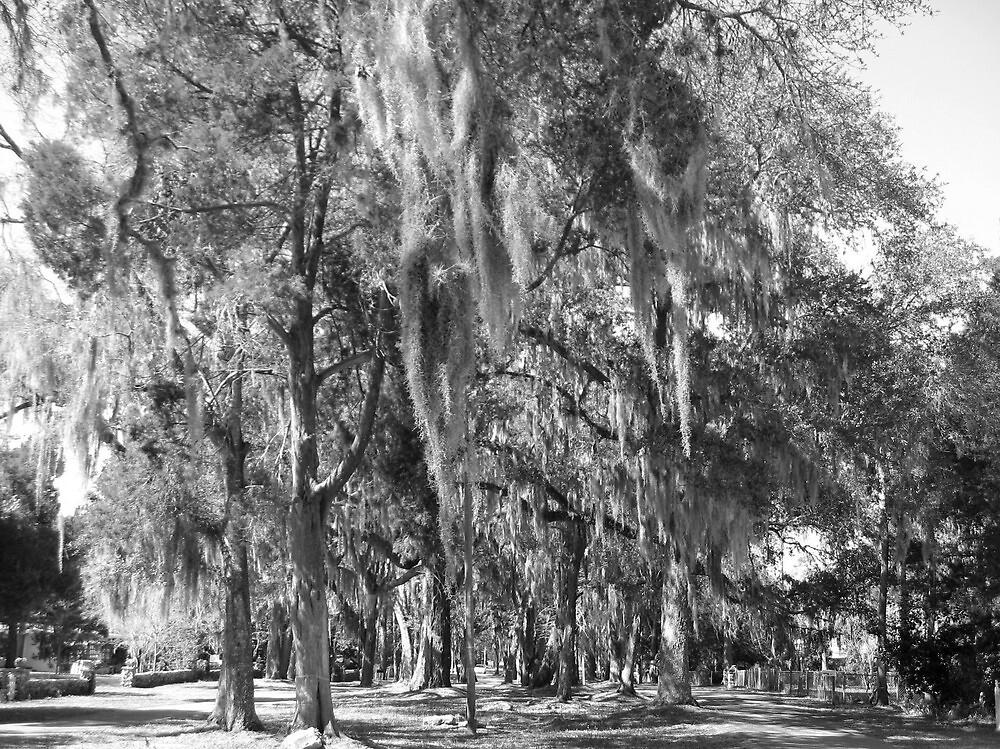 Love Those Mossy Trees by Debbie Robbins