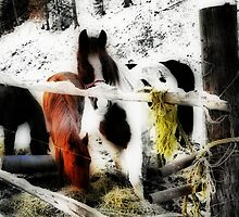 Mountain Ponies by Ann Eldridge